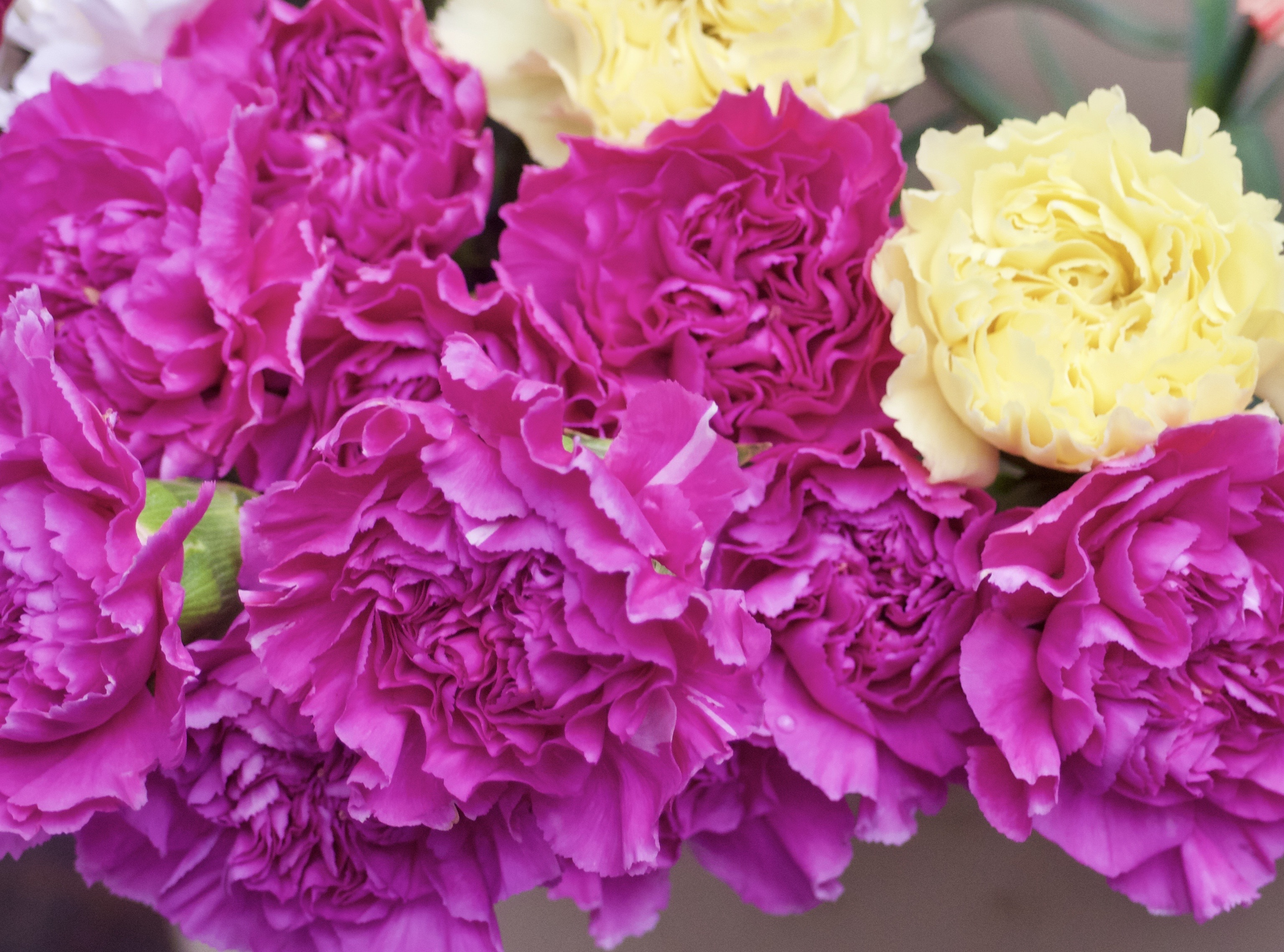 10 – Guernsey Flowers Direct